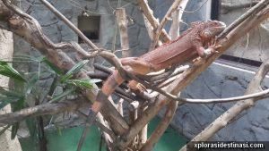Mengkarung di zoo