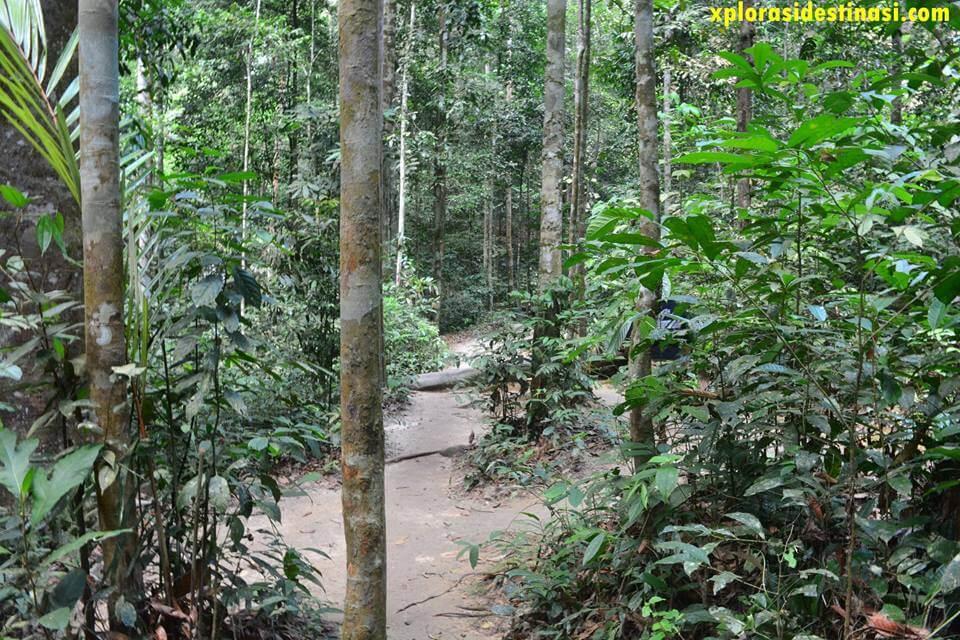 Aktiviti Jungle Trekking di Hutan Lipur Sungai Tekala