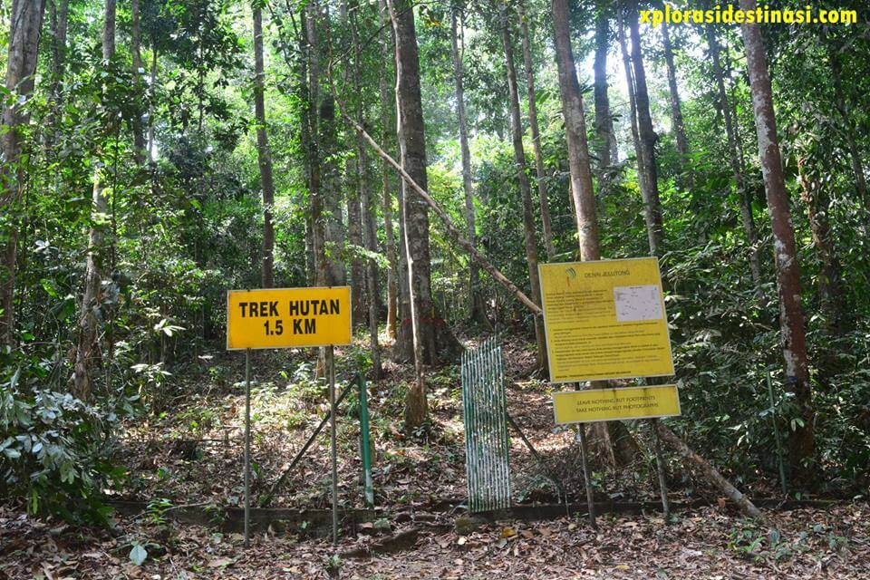 jungle-trekking-sungai-tekala