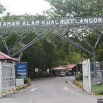 Menjejaki kawasan penting pelbagai spesies burung di Taman Alam Kuala Selangor