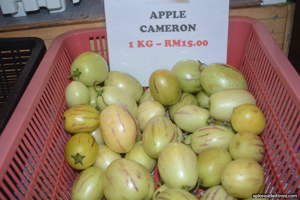 cameron-highland-apple