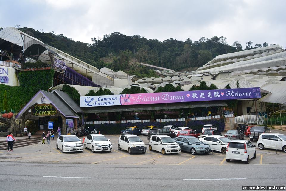 cameron-highland-main-attraction