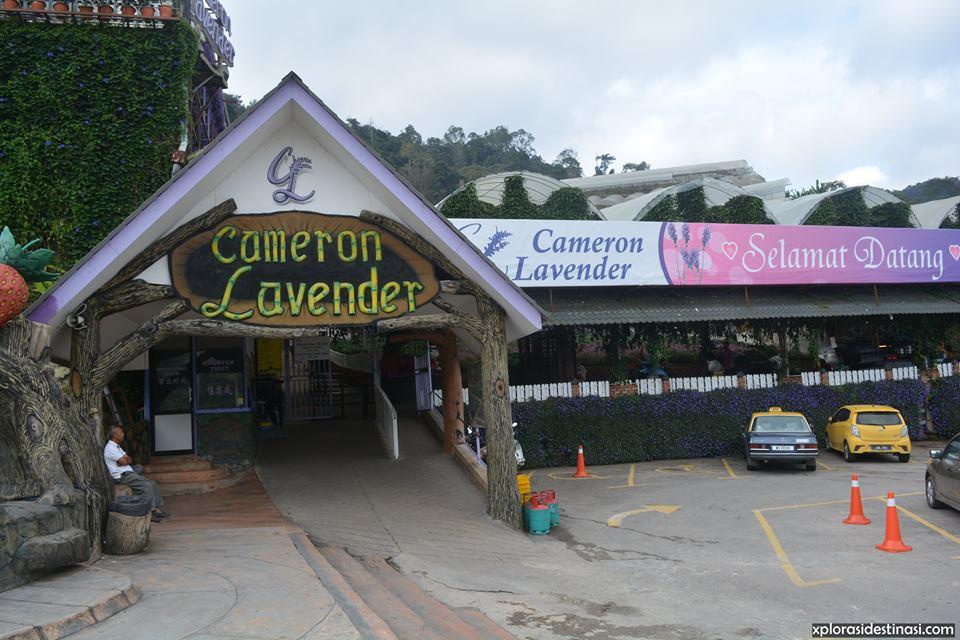 cameron-lavender-garden