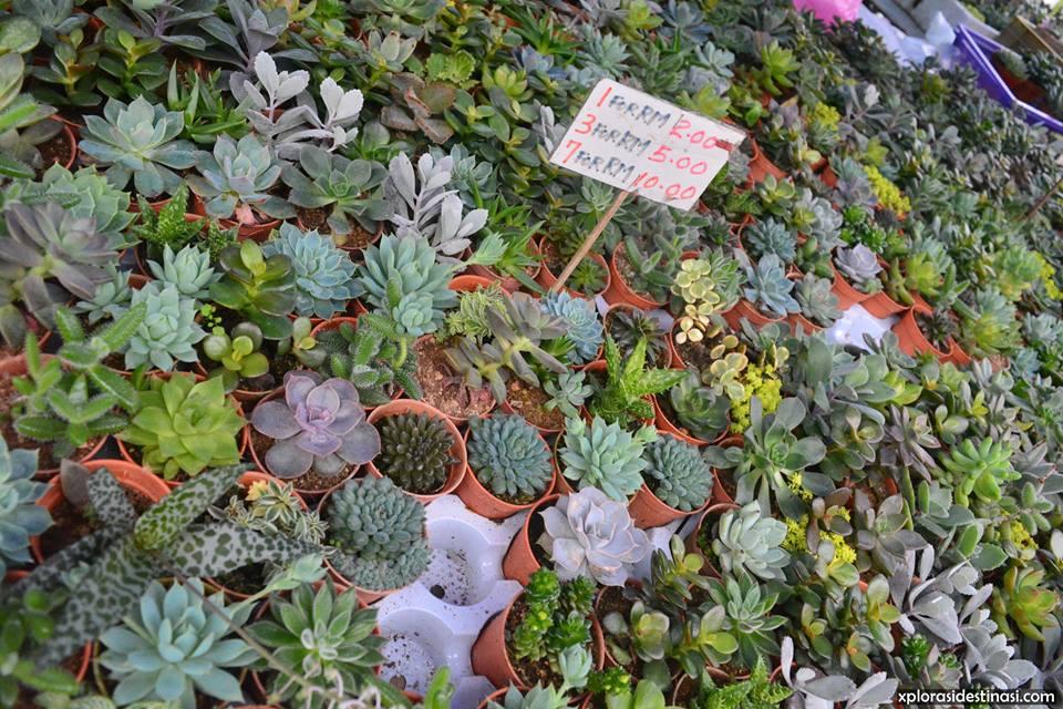 shopping-kaktus-pasar-malam