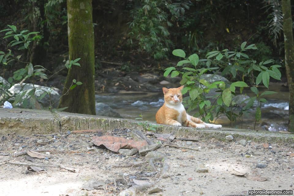 Binatang-di-hutan-lipur-sungai-tua