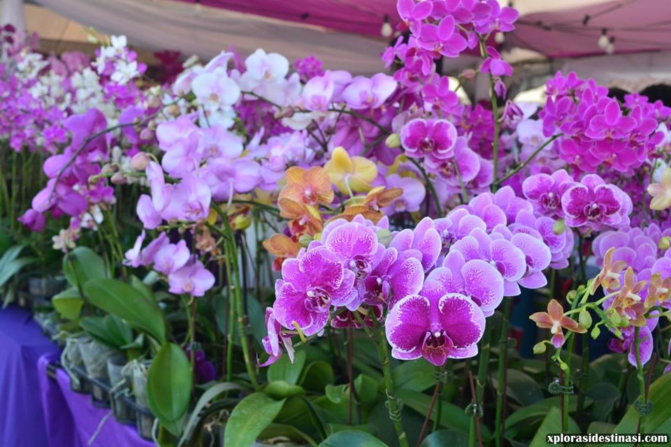 taman-bunga-diraja-floria