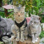 Mesilou Cat's Village tempat wajib pergi untuk para pencinta Kucing