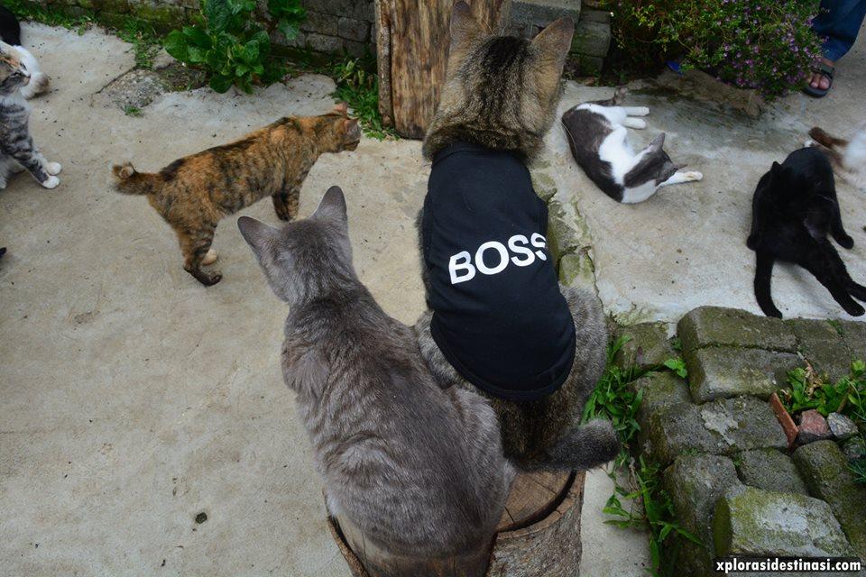 rumah-kucing-kundasang