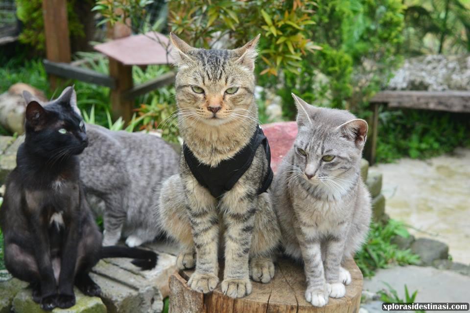 tempat-perlindungan-kucing-kundasang