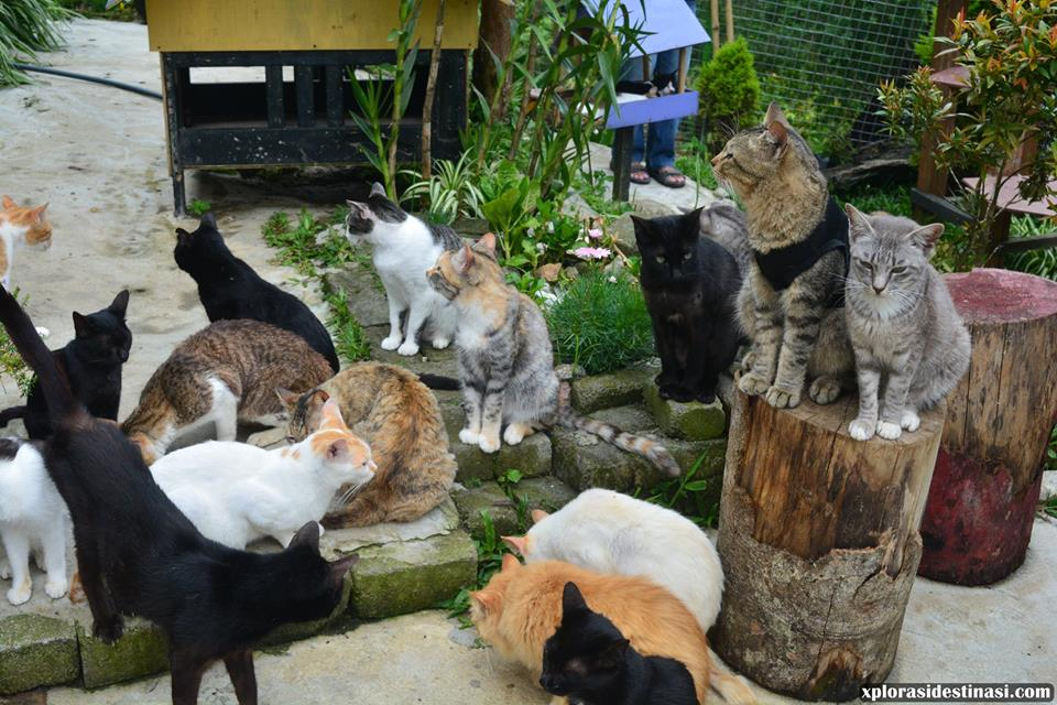 cat-village-in-kundasang