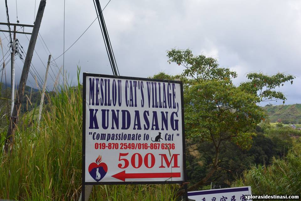 mesilou-cat-village-kundasang