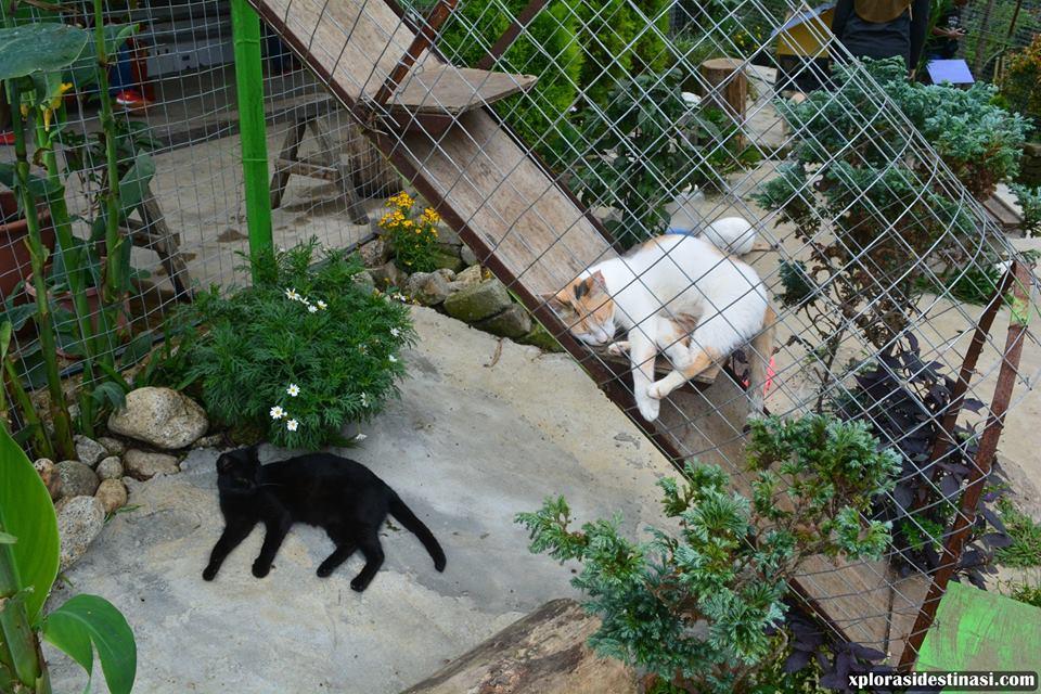 taman-rekreasi-untuk-kucing
