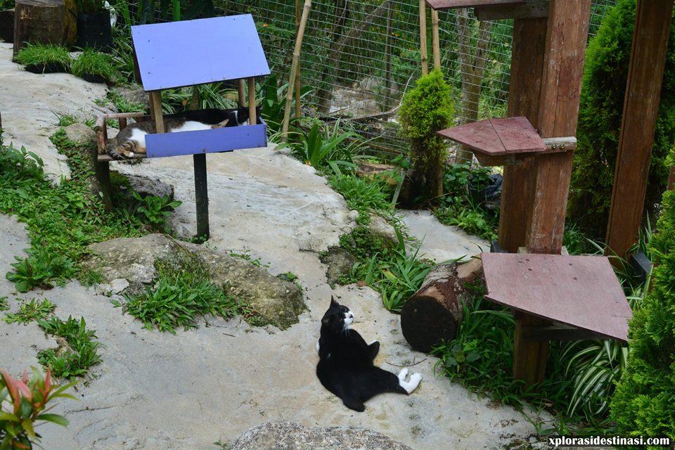 lindungi-kucing-sabah