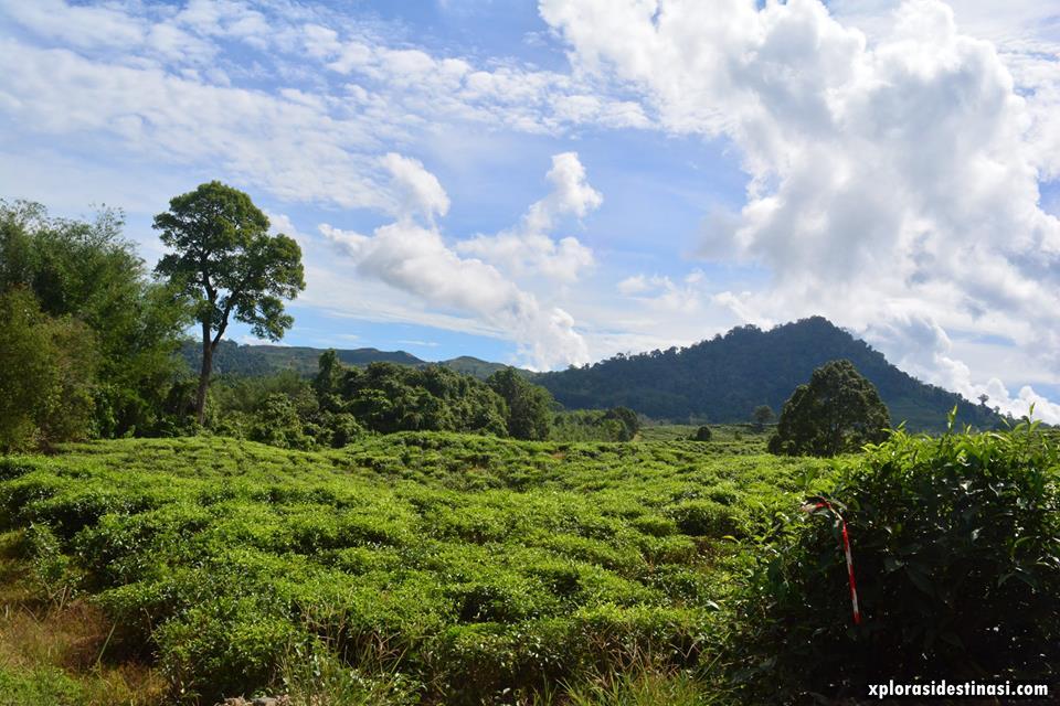 blog-sabah-tea