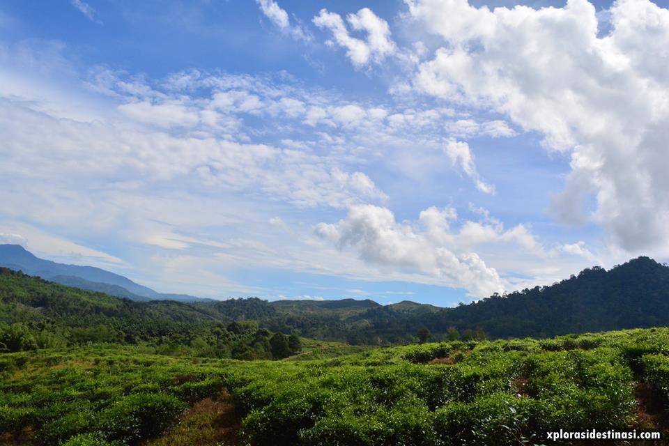 blog-tentang-sabah-tea