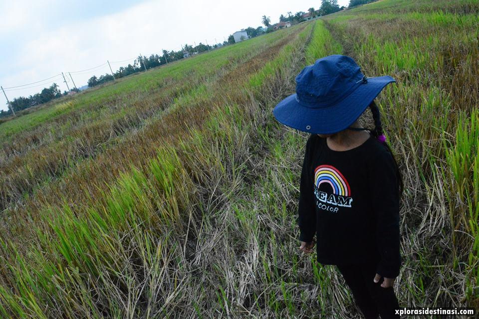 percutian-style-kampung-sekinchan