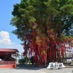 Pantai Redang Sekinchan tempat best untuk kutip remis