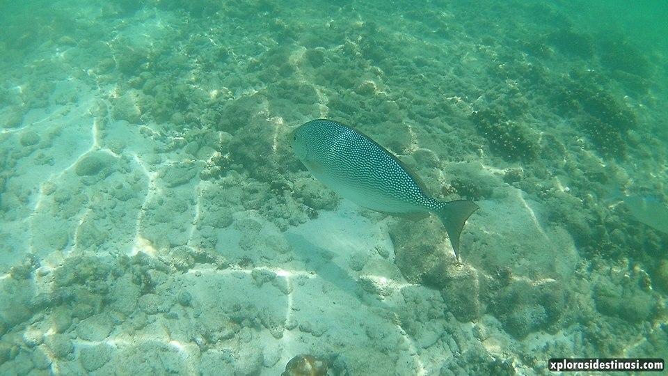 spesies-ikan-di-pulau-payar