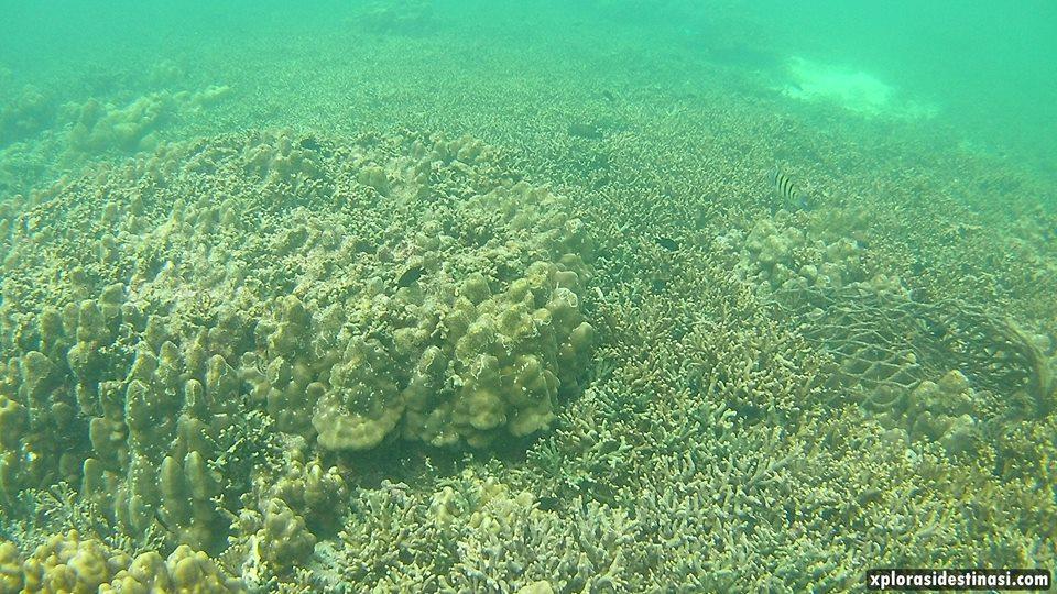 terumbu-karang-pulau-payar