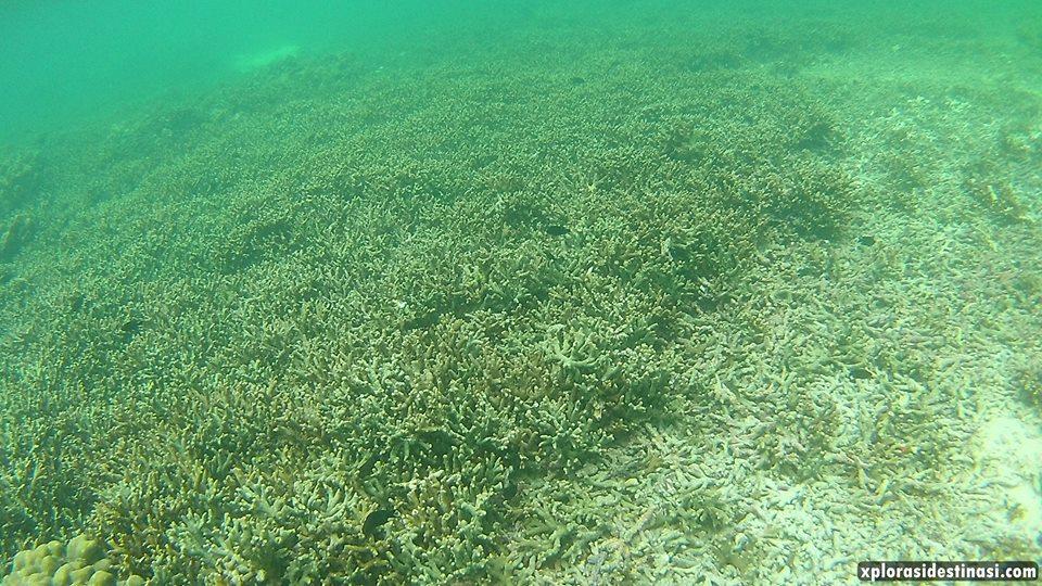 pulau-payar-langkawi-marine-park