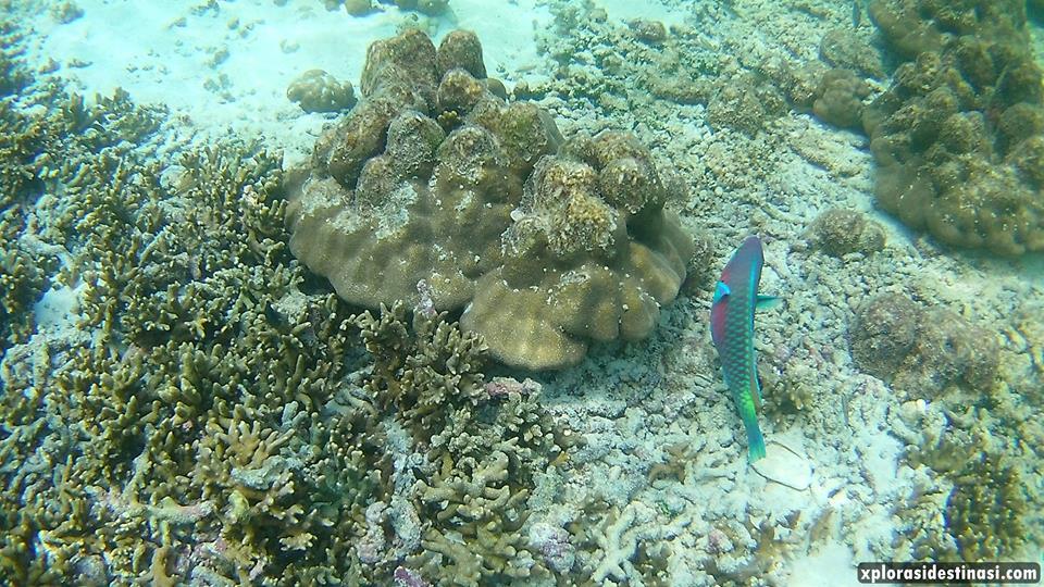 seronoknya-snorkeling-pulau-payar