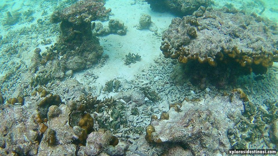 pakej-snorkeling-pulau-payar-langkawi