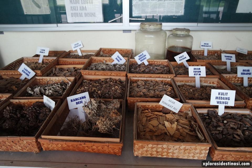 herba-akar-kayu-langkawi